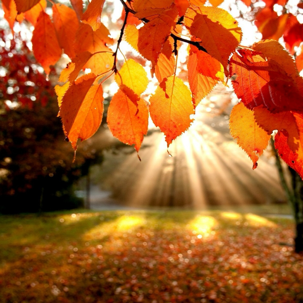Есенна депресия – какви са причините и как да премахнем светкавично?