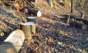 Спипаха 23-годишен да бракониерства в гори в Раданово