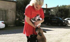 Върнаха откраднатите кучета на Лейди Гага, за които има награда $ 500 000