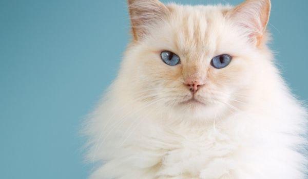 Заловиха котка наркотрафикант в Панама