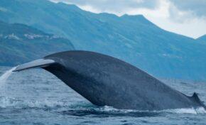Разказ от първо лице: Да се озовеш в устата на кит, докато се гмуркаш