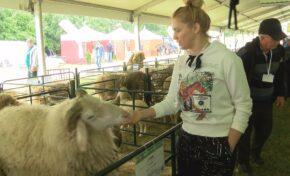 Въпреки дъжда, стотици са посетителите на деветото издание на Събора на овцевъдите (СНИМКИ/ВИДЕО)