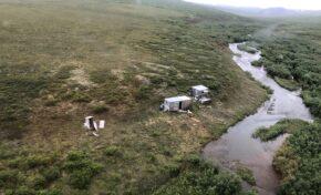 Мечка гризли преследва седмица мъж в Аляска, накрая го спаси хеликоптер