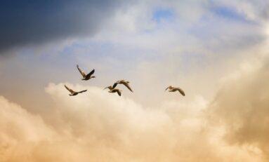 Мистериозна болест убива птиците в САЩ